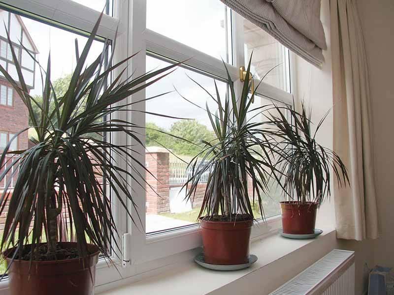plants next to a window